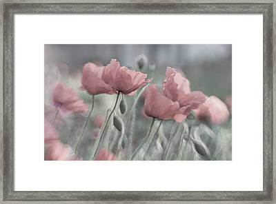 Softly Framed Print by Anne Worner