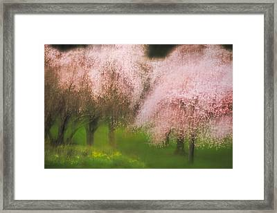 Softly Spoken Framed Print