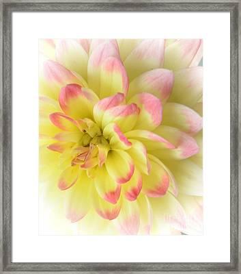 Softness Framed Print by Kathleen Struckle