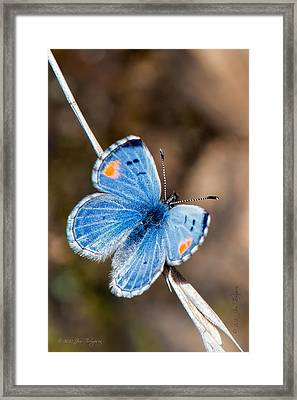 Sonoran Blue Framed Print