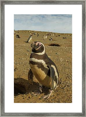 South America, Chile, Patagonia, Isla Framed Print