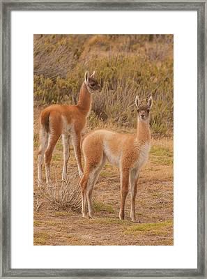 South America, Chile, Patagonia, Tierra Framed Print by Jaynes Gallery