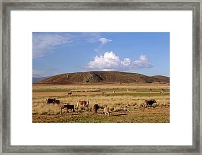 South America, Peru, The Andes Framed Print by Kymri Wilt