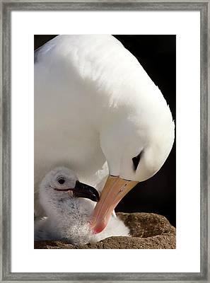 South Atlantic, Falkland Islands, New Framed Print