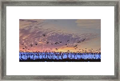 Southbound Framed Print by Steve Ratliff