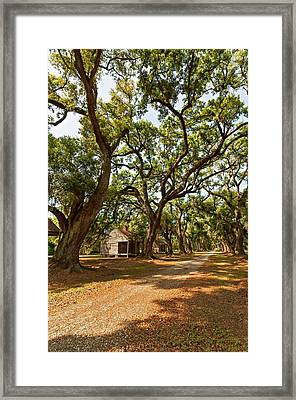 Southern Lane Framed Print