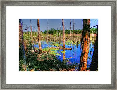 Southern Swamp Framed Print by Ed Roberts