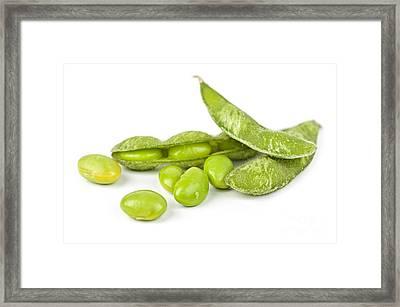 Soy Beans Framed Print by Elena Elisseeva