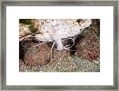 Spaghetti Worm Framed Print by Andrew J. Martinez