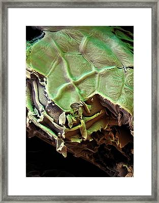 Spanish Moss Leaf Framed Print by Stefan Diller