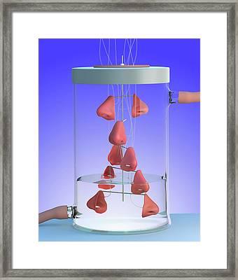 Spare Noses Framed Print by Tim Vernon