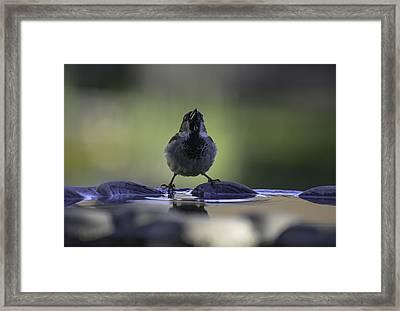 sparrow-BB-drip Framed Print