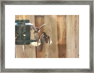 Sparrows Framed Print