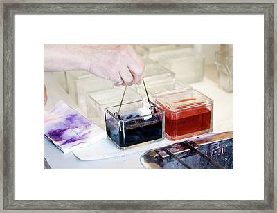 Sperm Whale Tissue Analysis Framed Print