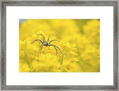 Spider Framed Print by Jaroslaw Grudzinski