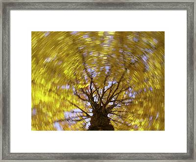 Spinning Maple Framed Print
