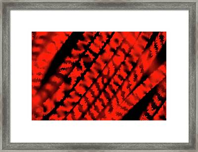Spirogyra Sp. Green Alga Framed Print