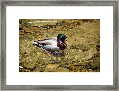 Splash Framed Print by JAMART Photography