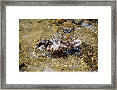 Splish Framed Print by JAMART Photography