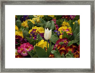 Spring Colour Framed Print by Maeve O Connell