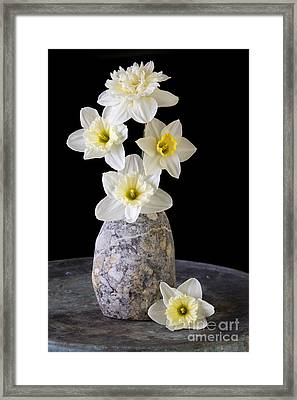Spring Daffodils Framed Print by Edward Fielding