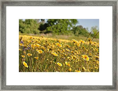 Spring Flowers Framed Print by Heather Mehlhoff