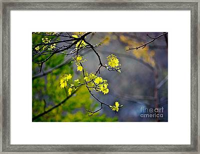 Spring Leaves Framed Print