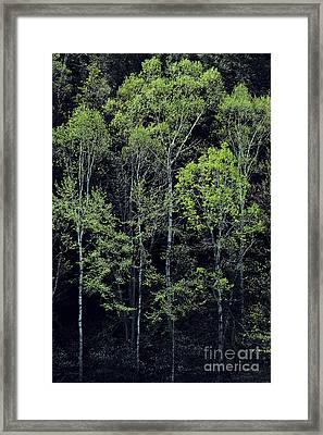 Framed Print featuring the photograph Spring Lights by Alan L Graham