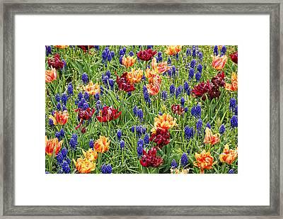 Spring Messengers Framed Print