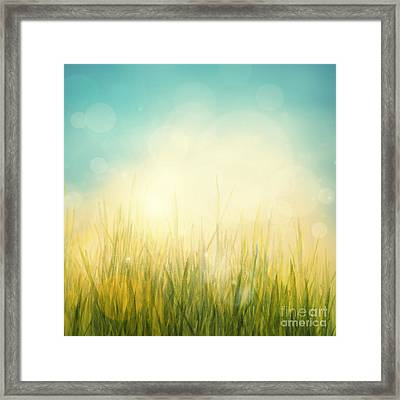 Spring Or Summer Abstract Season Nature Background  Framed Print