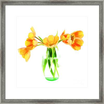 Spring Tulips Framed Print by Darren Fisher