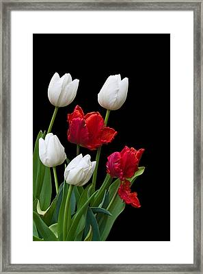 Spring Tulips Framed Print by Jane McIlroy