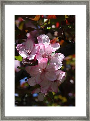 Framed Print featuring the photograph Spring by Vadim Levin