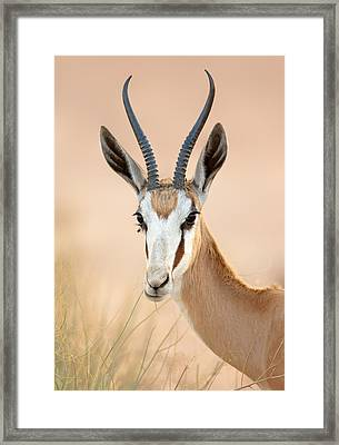 Springbok Portrait Framed Print by Johan Swanepoel