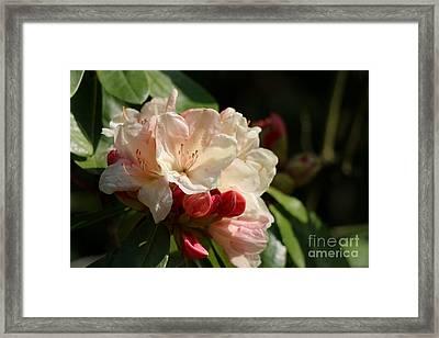 Springtime Love Framed Print