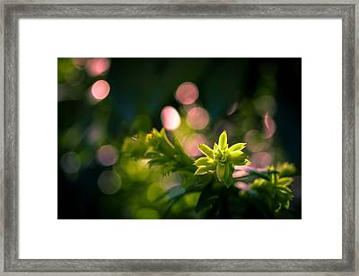 Sprout On Fire Framed Print