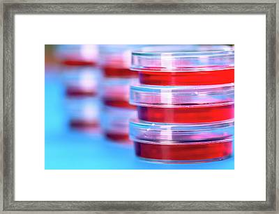Stack Of Petri Dishes Framed Print