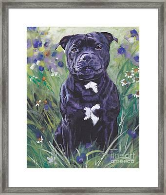Staffordshire Bull Terrier Framed Print by Lee Ann Shepard