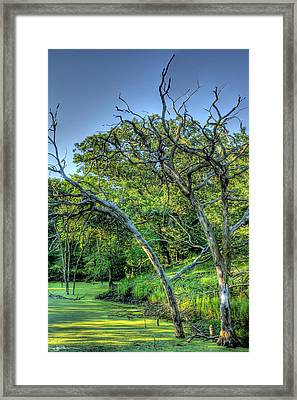 Stagnation Framed Print