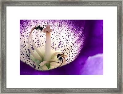 Stamen And Pestle   Framed Print
