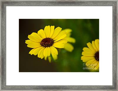 Stand Out Framed Print by Syed Aqueel