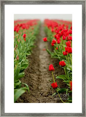Standing Out From The Crowd Framed Print by Nick  Boren