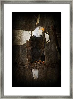 Standing Proud Framed Print by Melanie Lankford Photography