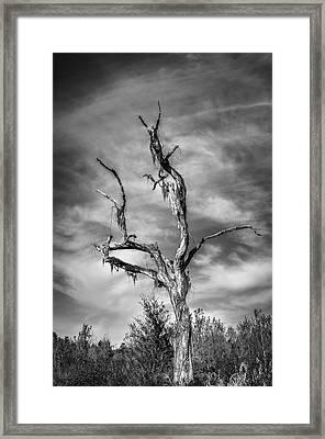 Standing Tall Framed Print by Carolyn Marshall