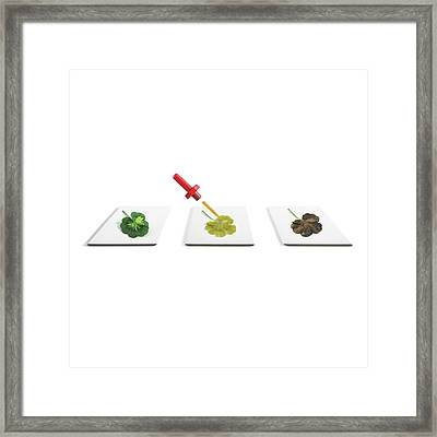 Starch Content Of Leaves Framed Print by Science Photo Library