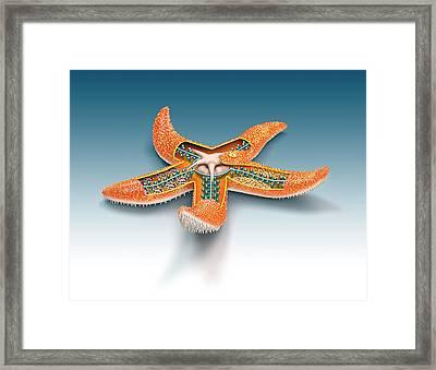Starfish Anatomy Framed Print by Mikkel Juul Jensen