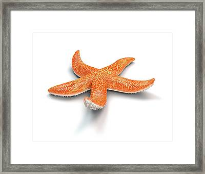 Starfish Framed Print by Mikkel Juul Jensen
