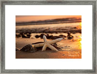 Starfish On The Beach At Sunset Framed Print