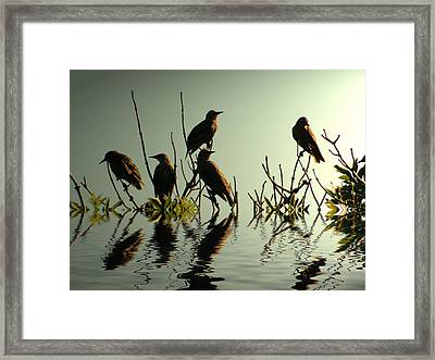 Starling Sunset Framed Print by Sharon Lisa Clarke