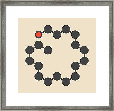 Stearyl Alcohol Molecule Framed Print by Molekuul/science Photo Library